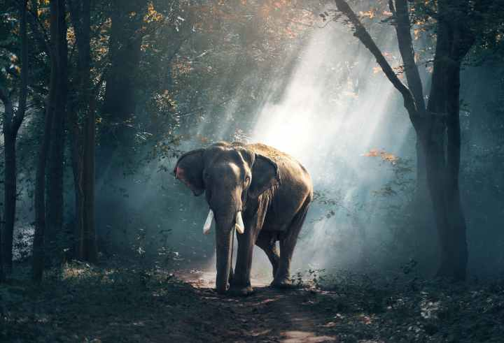 Elephant by skylibrarian Ranvling